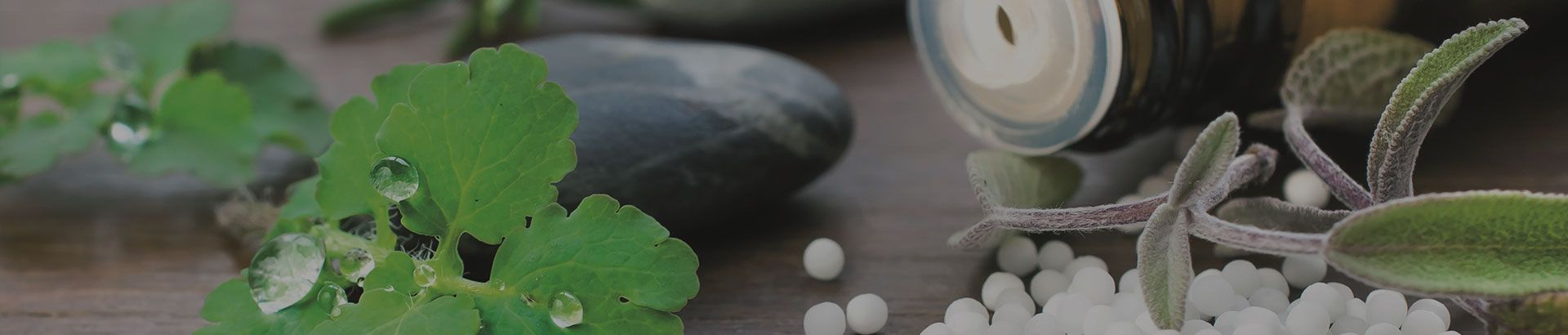 Discover Homeopathic Medicine